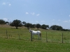 la-ventana-driftwood-horses