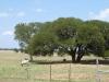 la-ventana-driftwood-longhorns